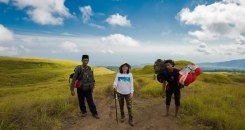 Savanna grass tall at Sembalun Lawang altitude 1500m of Mount Rinjani Natioanl Park